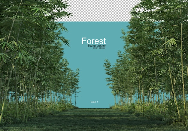Various forms of forest
