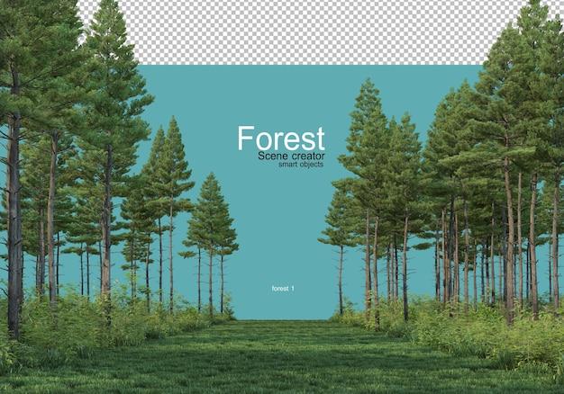 다양한 형태의 숲