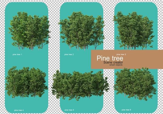 Various forms of pine trees rendering