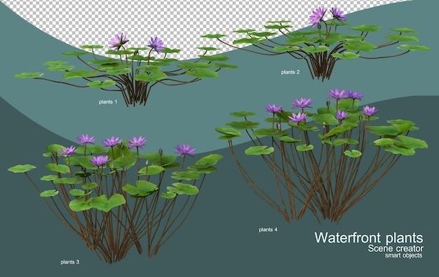 다양한 종류의 수변 식물