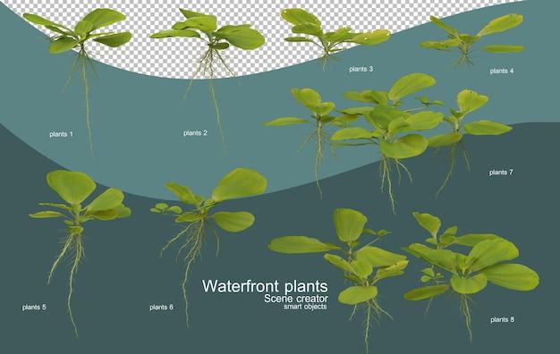 다양한 종류의 수변 식물 프리미엄 PSD 파일