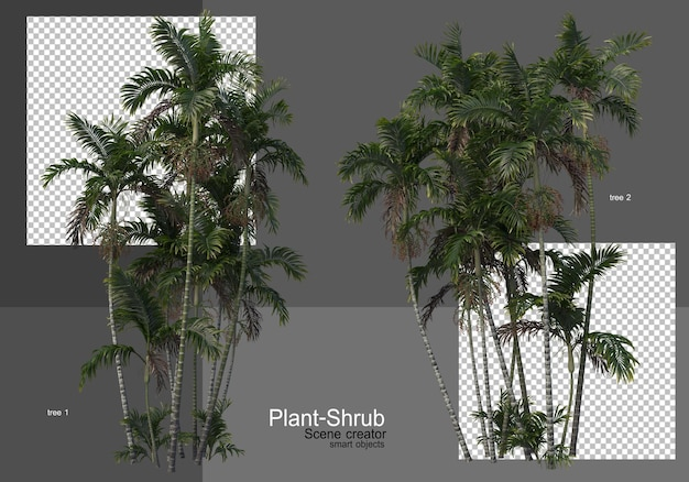 Various palm trees and shrubs