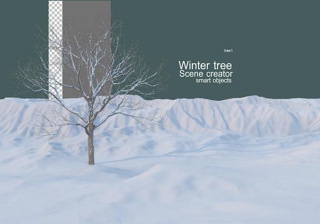 겨울의 다양한 나무와 식물