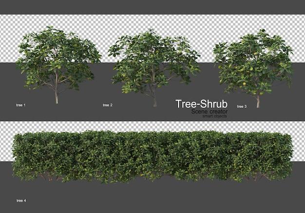 다양한 나무와 관목