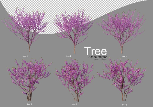 Various trees in full bloom with beautiful flowers