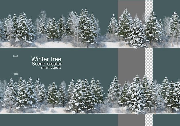 Various trees and plants in winter
