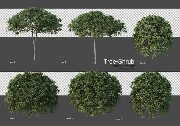 Various trees and shrubs Premium Psd