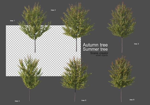 Various types of autumn and summer trees