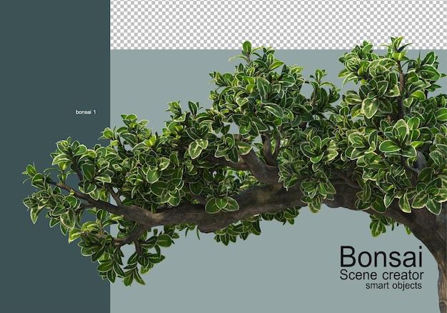 Various types of bonsai