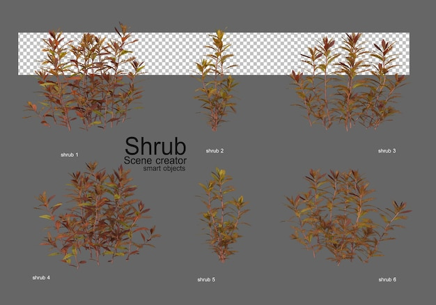 Various types of bushes for landscaping
