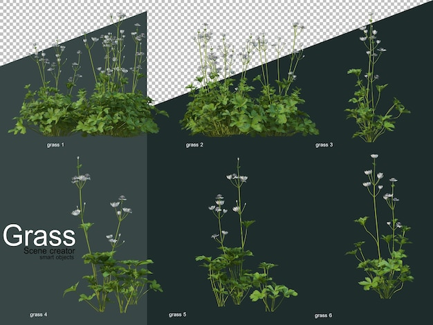 Various types of grass 3d rendering