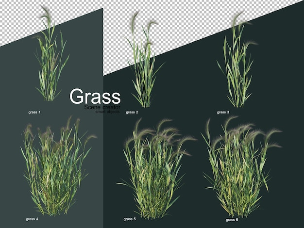 Various types of grass in 3d rendering