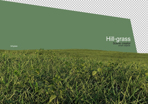 Various types of grass rendering isolated