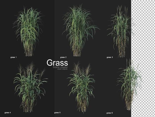 Various types of grass rendering