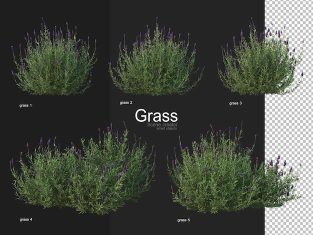 Various types of grass rendering Premium Psd