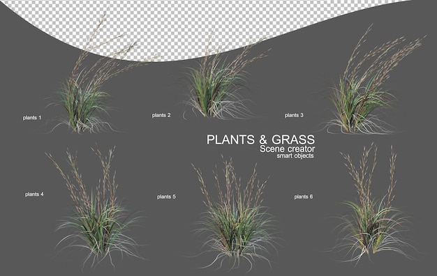 Various types of grass