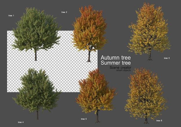 Различные виды осенних и летних деревьев