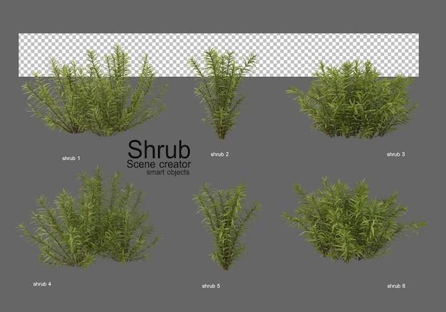 조경을 위한 다양한 종류의 덤불