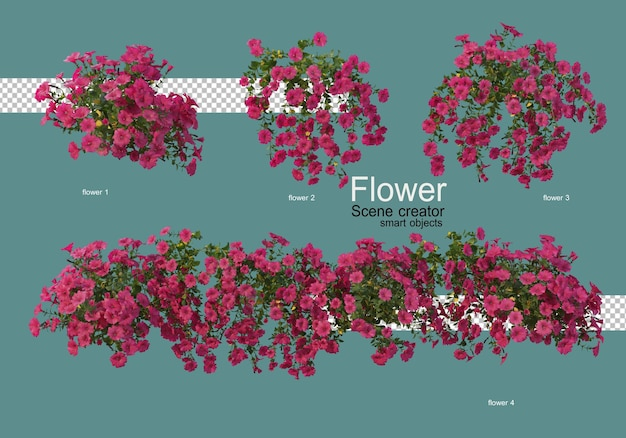 Разные виды цветов разной формы