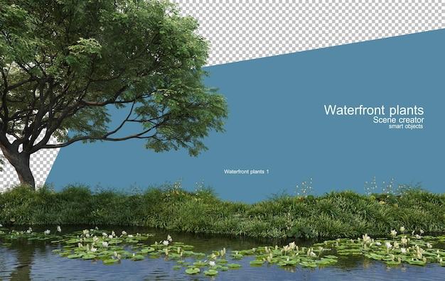 연못에 다양한 종류의 연꽃