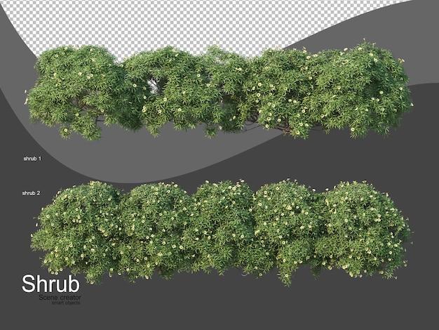 Различные виды кустарников