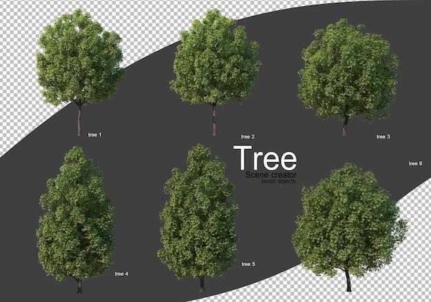 さまざまな種類の木のレンダリング分離