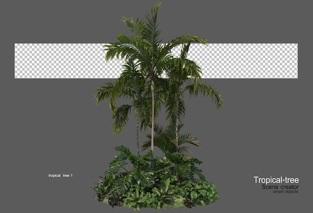 다양한 종류의 열대 나무