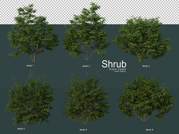 Various types of shrubs