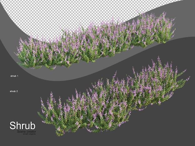 Various types of shrubs