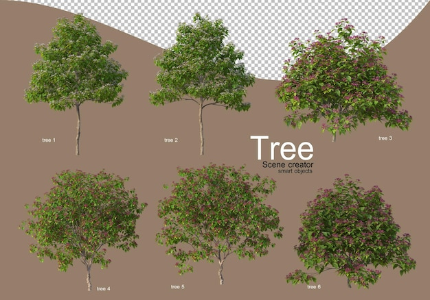 Various types of trees for beautiful landscaping