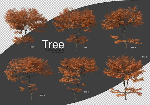 Various types of trees rendering isolated