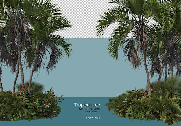 Various types of tropical trees