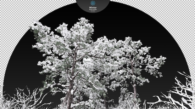 凍った小川のクリッピングパスを囲むさまざまな冬の木