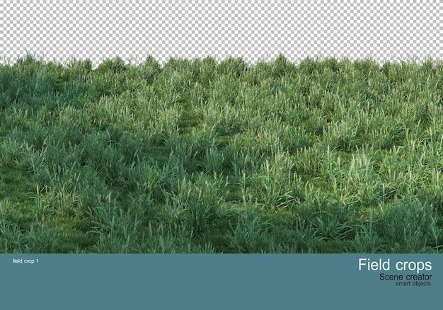 View of beautiful various crops
