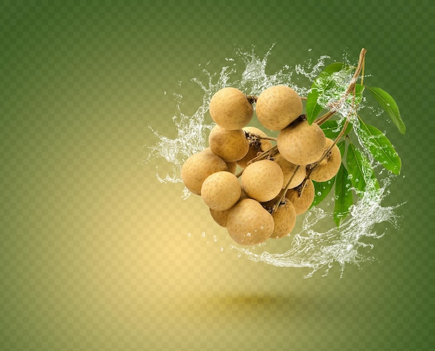 Water splash on longan with leaf isolated