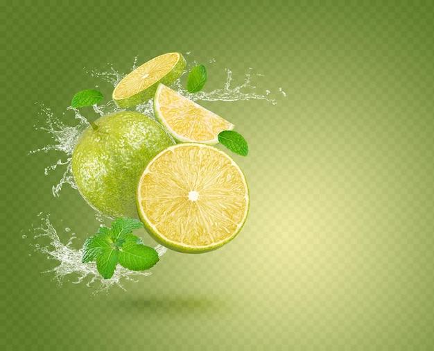 신선한 레몬 민트 격리에 물 얼룩