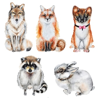 Watercolor fur wild animals