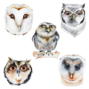 Watercolor owls set