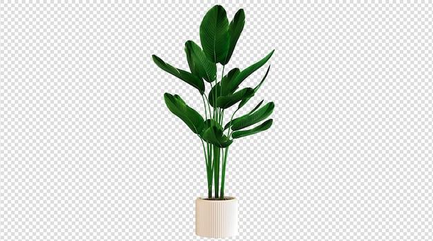Белые горшечные и широколистные растения