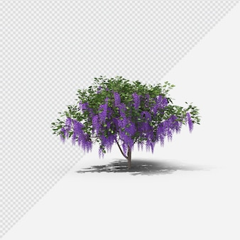 Wisteria tree isolated rendering with shadow