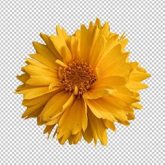 Желтый цветок кореопсиса изолированные рендеринг
