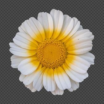 Желтая белая корона цветок ромашки изолированные рендеринг