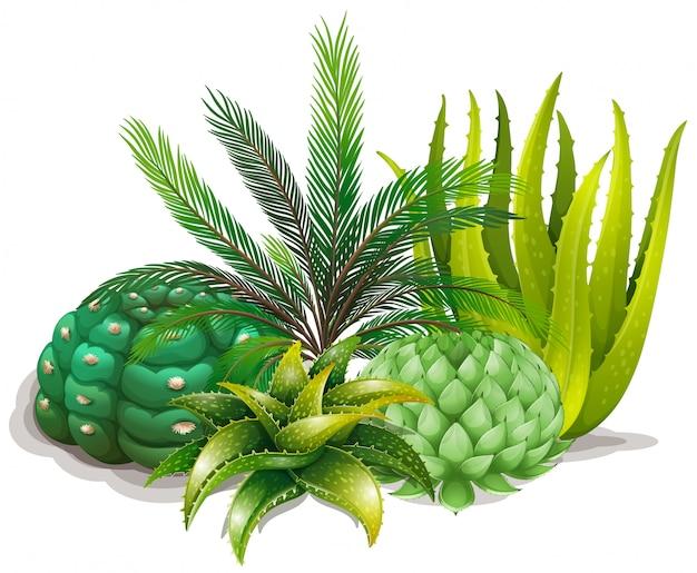 1つの庭のさまざまな種類の植物