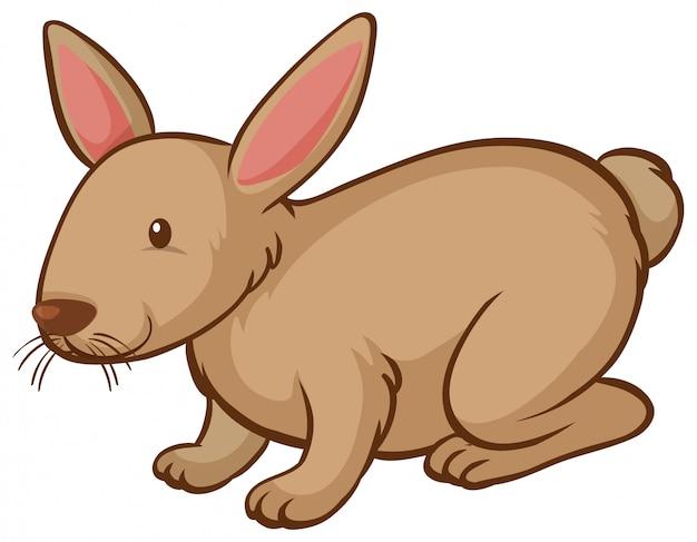 白い背景の上の1つの茶色のウサギ
