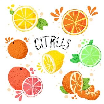 手描きの柑橘系の果物のベクトルイラスト。白-レモン、ライム、オレンジ、グレープフルーツの1つのコレクションに分離された新鮮な熟した柑橘類。