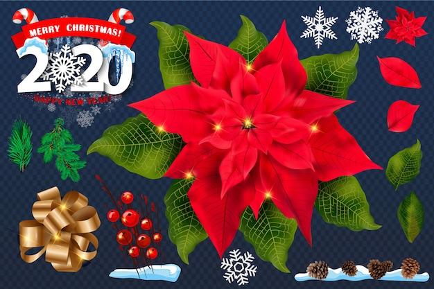 赤いポインセチアの花セット。 2020年のクリスマスのシンボル。