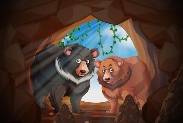 洞窟の中の2頭のクマ