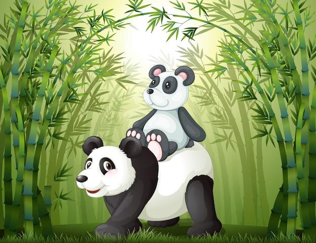 竹の森の中の2つのパンダ