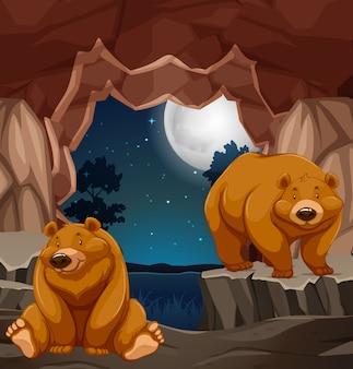 洞穴に2頭の褐色のクマ