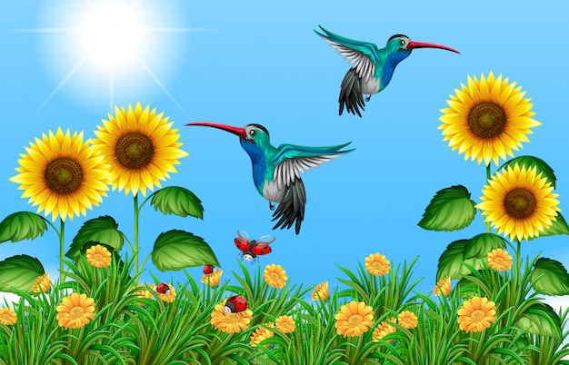 ひまわり畑を飛んでいる2つのハチドリ